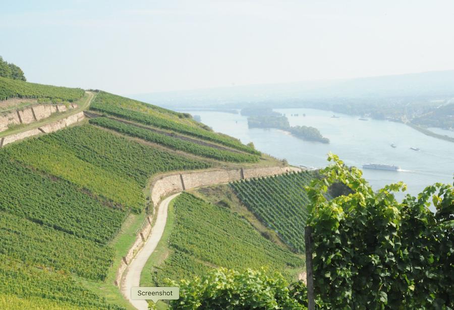 Rheingau wineregion