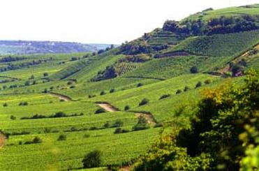 Rheinhessen wineregio
